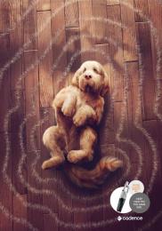 Cadence: Dog Print Ad by Heads Propaganda