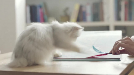 Whiskas: The Curious Cat Book Film by ALMAP BBDO Brazil