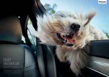 Panasonic: Windblown dog Print Ad by Saatchi & Saatchi Sydney