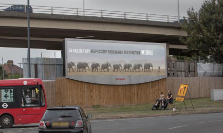 Born Free Foundation: World Elephant Day, 1 Outdoor Advert by WCRS