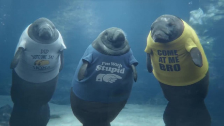 Geico: Manatee Shirts Film by @radical.media, The Martin Agency Richmond