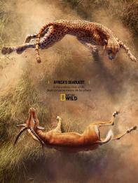 National Geographic: Cheetah and Impala Print Ad by Rocket Yard