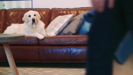 RSPCA: Reloved Fashion Film by Adcorp Australia