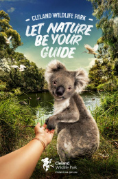 Cleland Wildlife Park: Koala Print Ad by Showpony Advertising