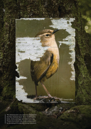 New Zealand Forest & Bird: Portraits by Predators, 3 Print Ad by Colenso BBDO Auckland