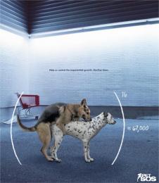 Pet SOS: Dogs Print Ad by McCann Erickson San Juan