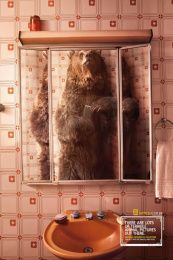 National Geographic: Bear Print Ad by Heads Propaganda