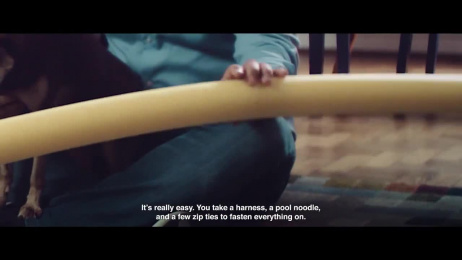 Pedigree: Dealing With Obstacles at Home Film by ALMAP BBDO Brazil