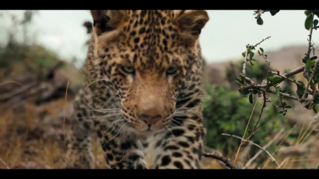 Marriott: You Are Here in South Africa Film by B-Reel, Grey New York
