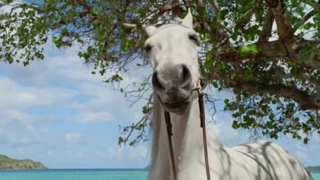 DirecTV: Hannah Davis and Her Horse Film by Grey New York