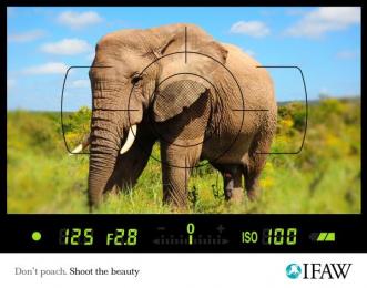 Ifaw: Anti-poaching, Elephant Print Ad by Scanad Kenya