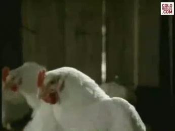 Le Gaulois Poultry: FRENCH CANCAN Film by Leo Burnett Paris
