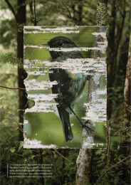 New Zealand Forest & Bird: Portraits by Predators, 2 Print Ad by Colenso BBDO Auckland