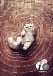 Cadence: Cat Print Ad by Heads Propaganda