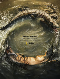 National Geographic: Crocodile and Wildebeest Print Ad by Rocket Yard