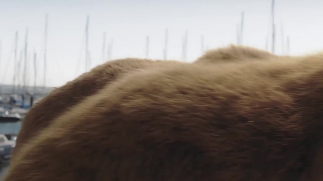 AG Insurance: Bear Film by FamousGrey Brussels