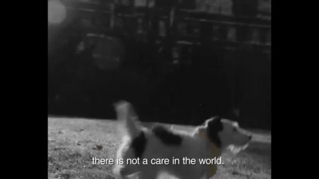 Dogs Trust: A Tail of True Love Film by TMW