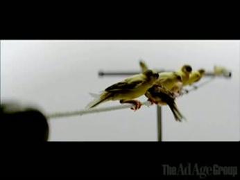 Pricewaterhousecoopers: PricewaterhouseCoopers Birds Film by Supply & Demand