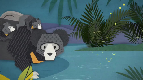 Woodland Park Zoo: Never The Same-Sloth Bear Cubs Film by Wongdoody