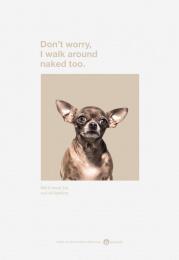 Amanda Foundation: Chihuahua Print Ad by Saatchi & Saatchi USA