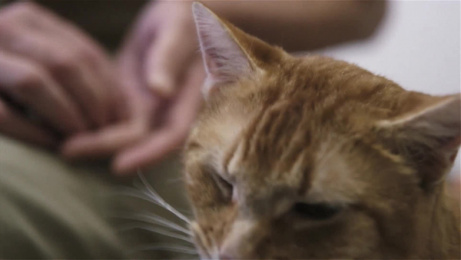 Sheba: The Cats That Rule The World: Prison Cat, Galileo Film by AMV BBDO London, Flare, Mediacom London