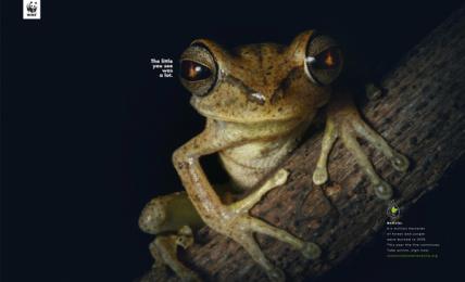 WWF: Frog Print Ad by Humano Bolivia