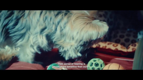 Pedigree: A Different Way to Play Film by ALMAP BBDO Brazil