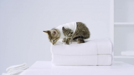 Persil: Laundry purrfection Film by TBWA\Chiat\Day Los Angeles