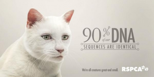 RSPCA QLD: We're all creatures great & small - Cat [alternative version] Print Ad by The Engine Group
