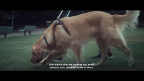 Pedigree: Developing Memory Film by ALMAP BBDO Brazil