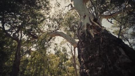 Tourism Australia: With Love From Aus Film by M&C Saatchi Sydney