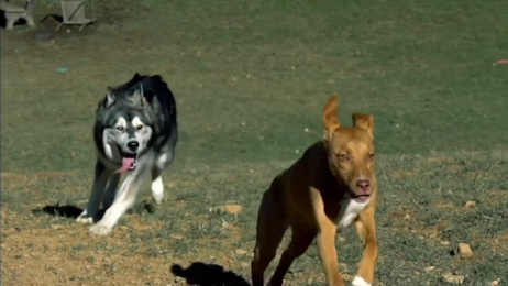 Hill's: Dog Park Film by Red Fuse