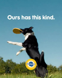 Pedigree: One True Loyalty Program, 1 Film by BBDO New York