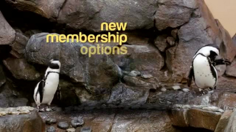 Georgia Aquarium: Penguin - Annual Membership Film by Ames Scullin O'Haire Atlanta