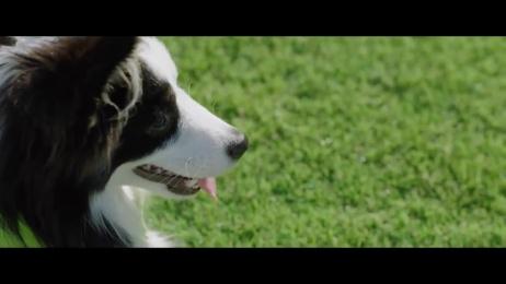 Pantone: Greenery Film by Pantone