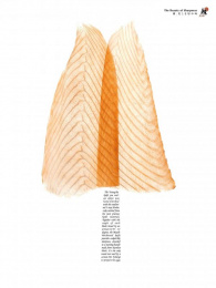 Zwilling J.a. Henckels: Salmon Print Ad by Herezie