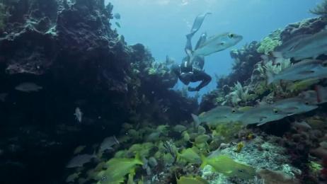 Royal Caribbean International: Case study Film by Mullen Boston