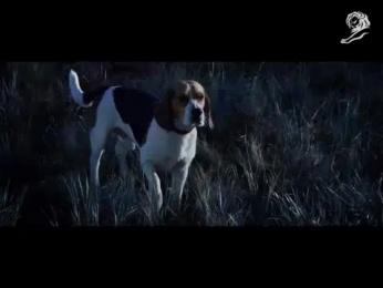 Gevalia: MONSOON STORM Film by Lowe Brindfors Stockholm