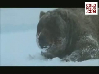 The State Of Russia Tv Programme: RUSSIAN BEAR Film by 4creative