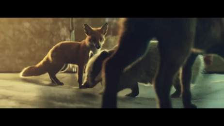 John Lewis: Buster The Boxer [02:09] Film by adam&eveDDB London, Blink Productions, LELAND MUSIC, MPC