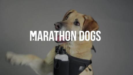 Csob: Marathon Dogs Film by MUW Saatchi & Saatchi Bratislava
