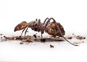 Doom: DOOM INSECTS, 2 Print Ad by TBWA\Hunt\Lascaris Johannesburg