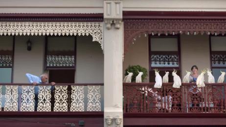 Amazon: Cockatoo Film by Whybin\TBWA Sydney