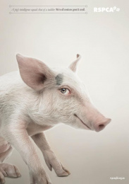 RSPCA QLD: We're all creatures great & small - Pig Print Ad by The Engine Group