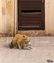 Pet SOS: Cats Print Ad by McCann Erickson San Juan