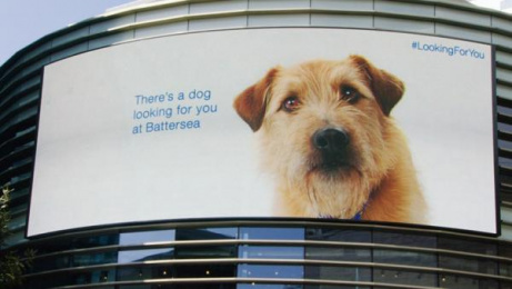 Battersea Dogs & Cats Home: Looking For You [image] Outdoor Advert by McCann London, OgilvyOne London