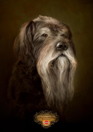 Pedigree: Monty Print Ad by Colenso BBDO Auckland