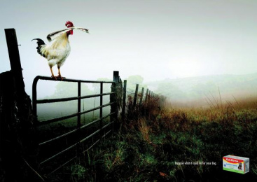 Bob Martin Conditioning Tablets: Rooster Print Ad by DraftFCB Johannesburg