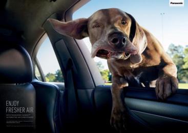 Panasonic: Confused dog Print Ad by Saatchi & Saatchi Sydney