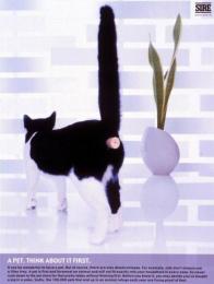 Animal Distress: CAT/CORK Print Ad by D'arcy